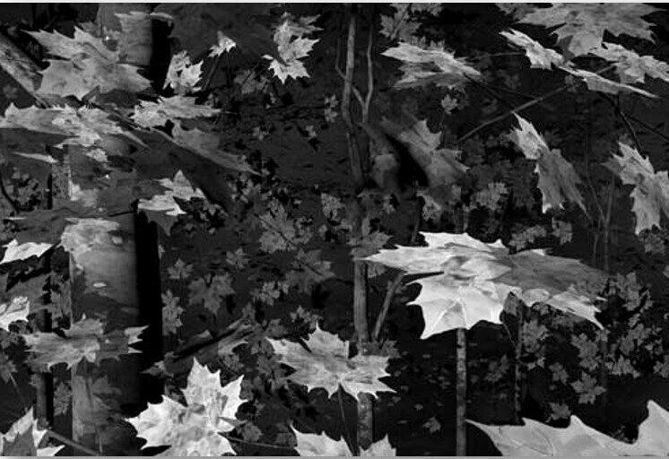 Waldstück 4.3 2015 Aquarell, Silbergelatine auf Baryt. Gerahmt 180 x 120 cm