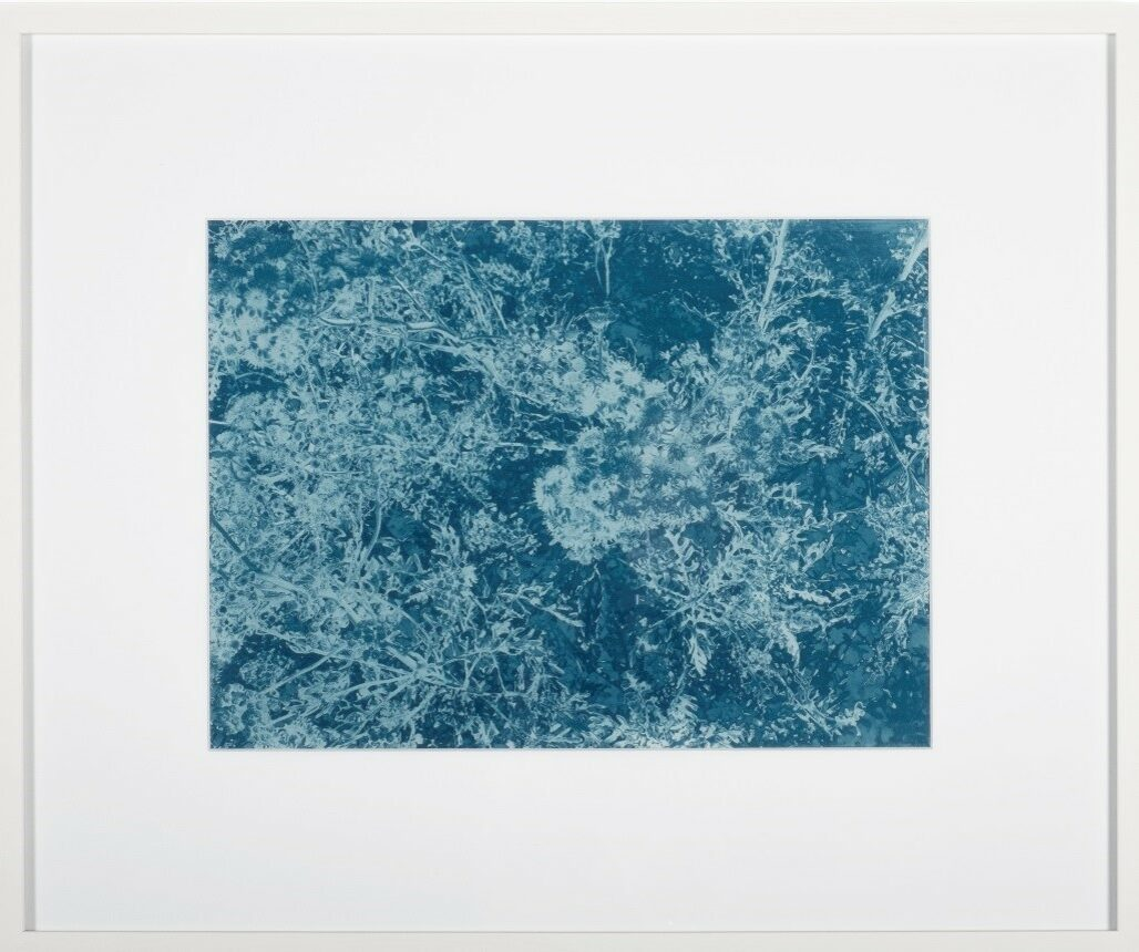 Wald 2014, Cyanotypie auf Papier