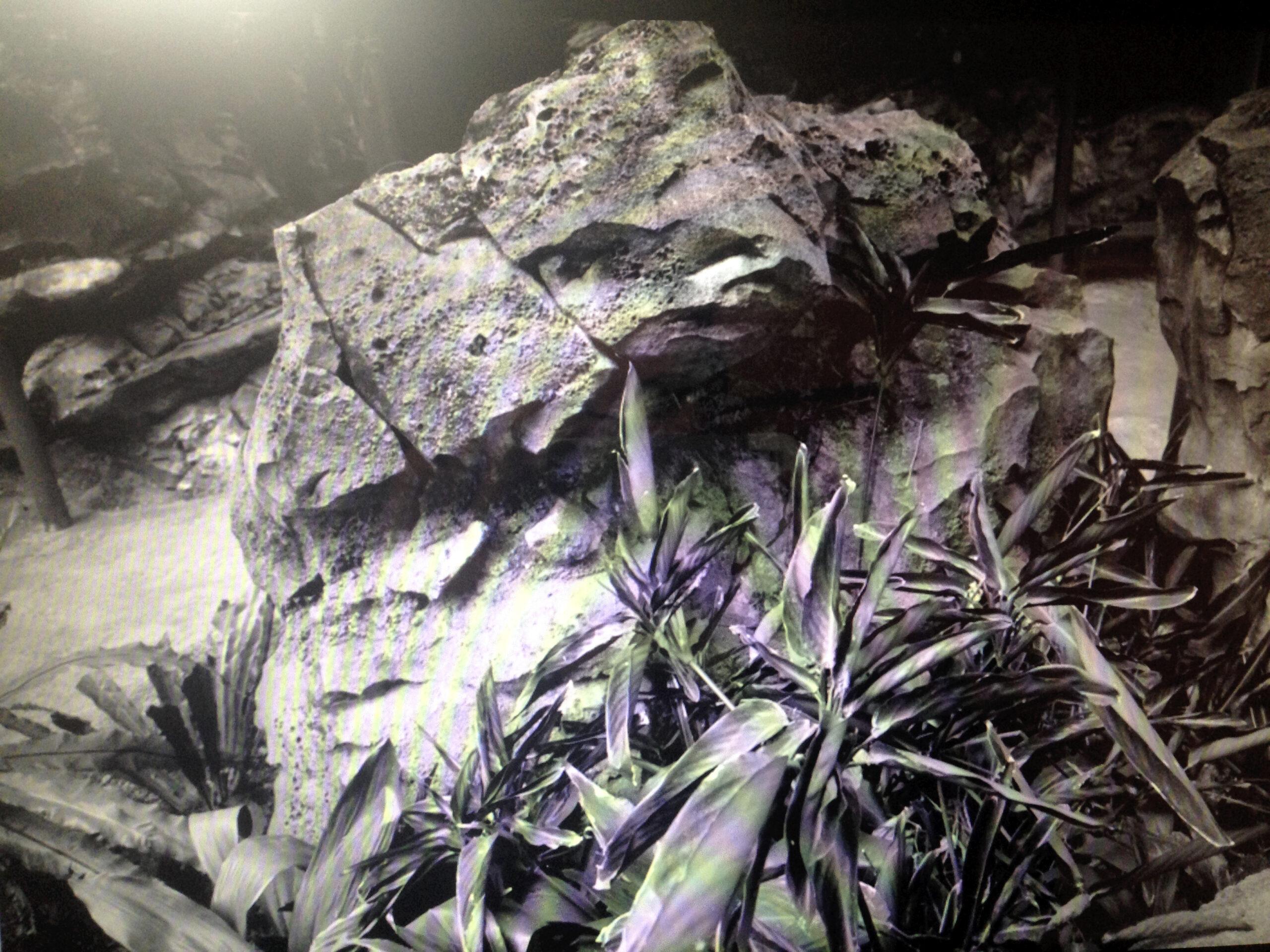 Pia Kintrup_the stone_the nonexistent areas are of particular interest_Print auf Aluminium Lightbox_45 cm x 60 cm x 15 cm